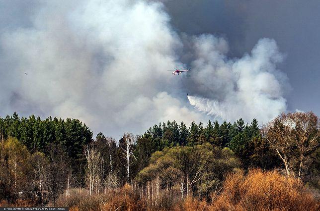 Pożar lasu w okolicach Czarnobyla.