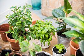 Rośliny doniczkowe – nazwy, popularne, pokojowe, tanie