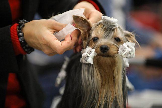 Ustawa o ochronie zwierząt. Setki tysięcy rasowych psów skazanych na bycie kundelkiem