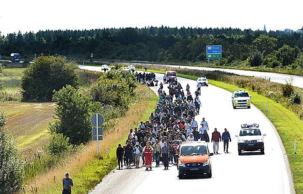 Imigranci maszerują autostradą w Danii. Chcą się dostać do Szwecji