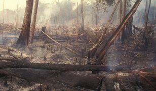 Naukowcy mówią, kiedy nastąpi katastrofa ekologiczna