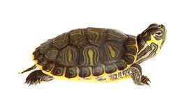 Żółw - cena, żywienie, choroby