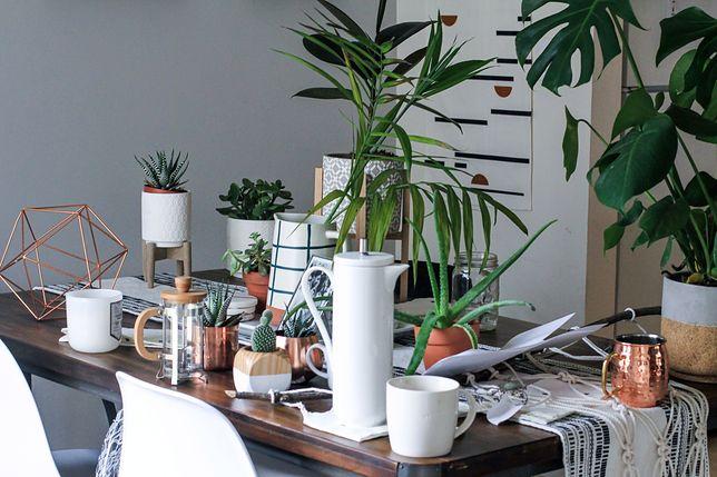 Powietrze w twoim domu oczyści także roślina, którą do tej pory uważałaś za truciznę