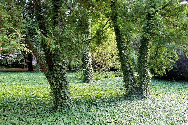 Fotostory: Park Orlicz-Dreszera