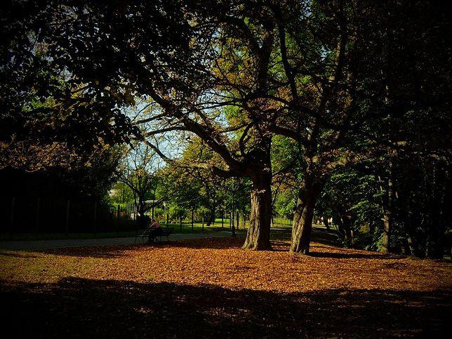 Jesień już w Warszawie [ZDJĘCIA]