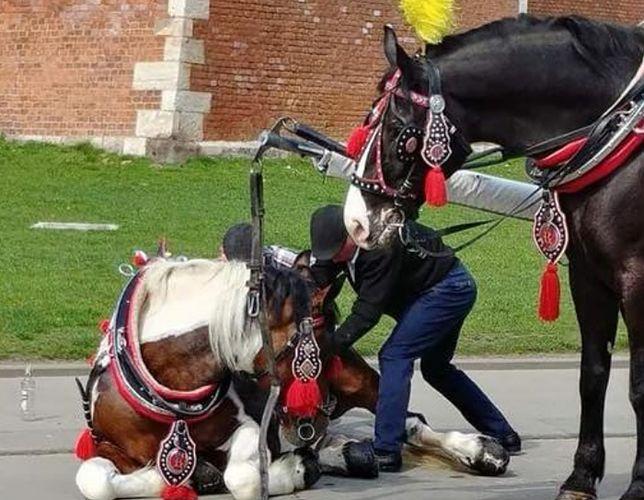 Koń zemdlał na rynku krakowskim