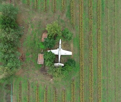 Polski samolot w środku pola. Jest ukryty w zagajniku