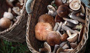 W lasach w Polsce pojawia się coraz więcej grzybów
