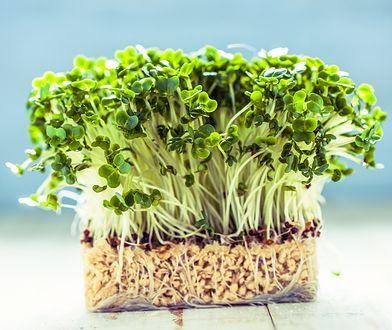 Siła z nasionka