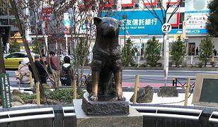 Pomnik profesora i psa znajduje się także na uniwersytecie, na którym wykładał mężczyzna