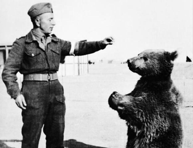 Pomnik niedźwiedzia Wojtka w Edynburgu