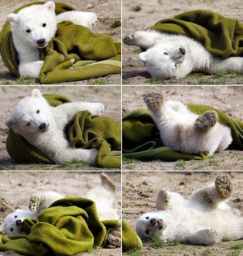Znamy już przyczynę śmierci niedźwiadka Knuta