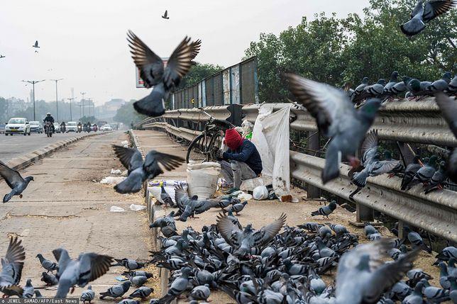 Indie. 11-latek z ptasią grypą? Kraj bije na alarm