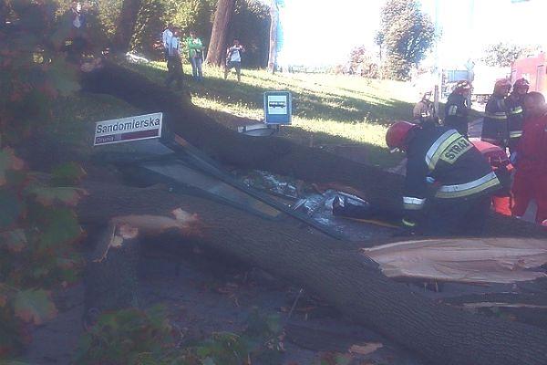 Spadający konar zniszczył samochód i przystanek autobusowy. Trzy osoby w szpitalu