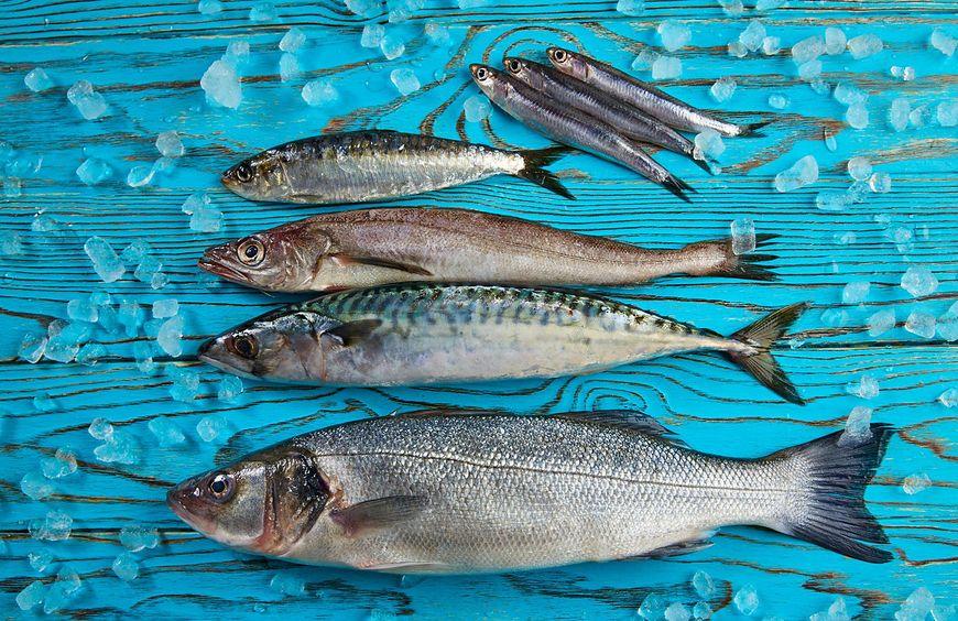 Ryby zagrożone wymarciem