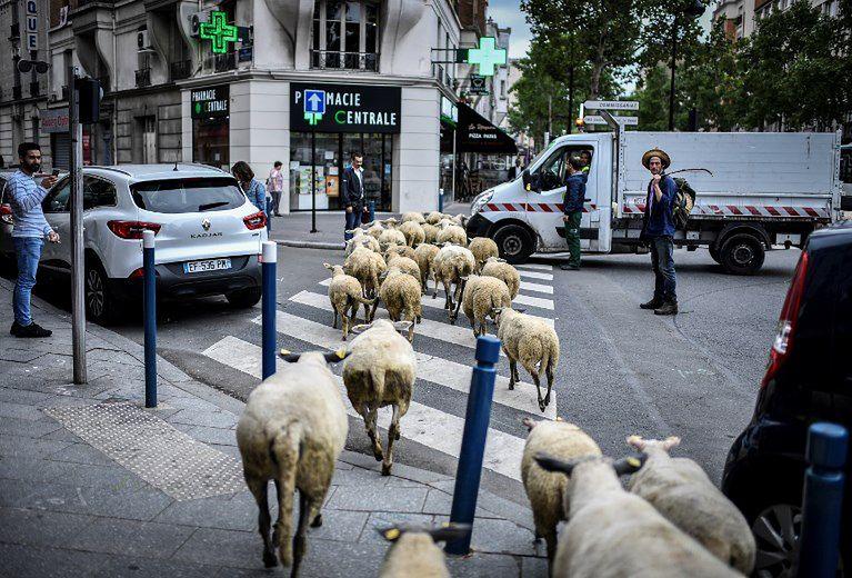 Zwierzęta wyszły na ulicę. Nietypowa akcja ma dać mieszkańcom do myślenia