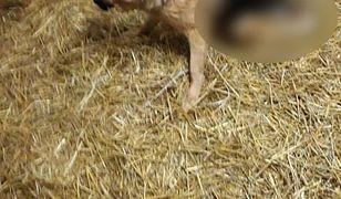Martwe zwierzęta w schronisku w Jędrzejewie. Interwencja fundacji ochrony zwierząt