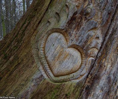Walentynki. Kim był święty Walenty? Na zdj. walentynkowa płaskorzeźba w martwym drzewie