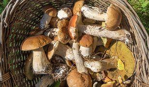 Koniec lata i początek jesieni to czas na grzybobranie. Z darów lasu można przygotować wiele smacznych dań.