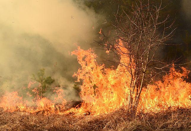 Trwają pożary w Australii. Coraz więcej ofiar