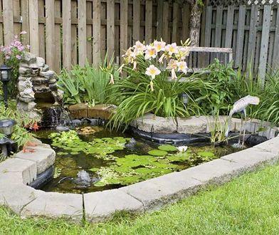 Jak zrobić oczko wodne w ogrodzie?