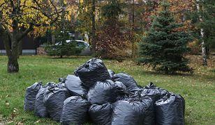 Jesienne prace w ogrodzie: nie zawsze wolno spalać liście. Kara to nawet 5 000 zł