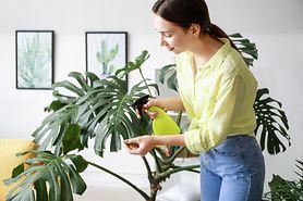 Jak nawilżyć powietrze w domu?