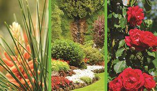 Architektura krajobrazu cz. 7. Projektowanie, urządzanie i pielęgnacja elementów roślinnych