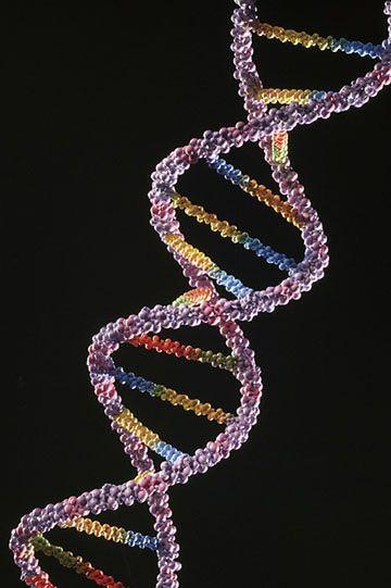 """DNA """"pamięta"""" nasze wspomnienia"""