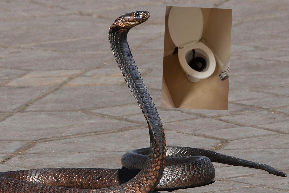 Wielka Brytania. Wąż w toalecie zaskoczył 34-latkę