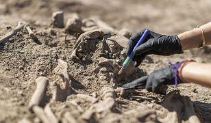 Niezwykłe odkrycie pod Raciborzem. Rolnik natrafił na groby sprzed 4 tys. lat