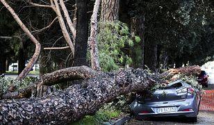 Upadające drzewa zabiły wiele osób.