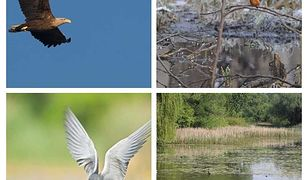 Warszawa chroni zagrożone gatunki. Rusza renaturyzacja stolicy