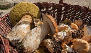 Włosi muszą wykupić zezwolenie, by zbierać grzyby.