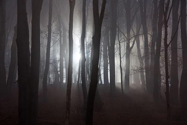 Las z mroczną tajemnicą - Witkowice, Polska