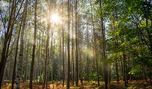 W lesie grasują nietypowi goście. Leśnicy apelują