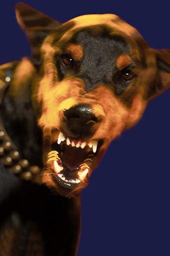 Szkolą listonoszy, jak odczepić psa od nogawki