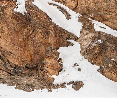 Lampart znajduje się na skale, tuż pod linią środka zdjęcia