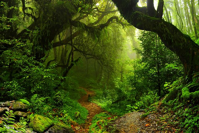 Nie mamy wyjścia - drzewa, albo śmierć planety