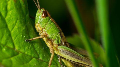 WikiLeaks o tajnej broni CIA. Grasshopper – i antywirusy są bez szans