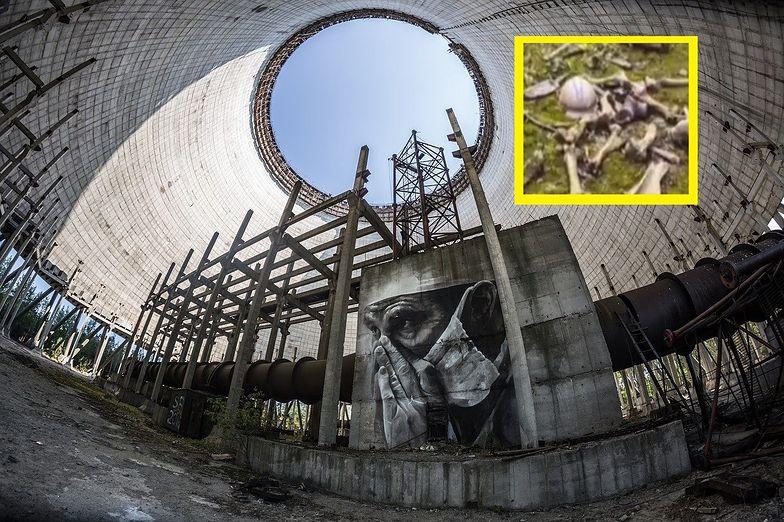 Przerażające odkrycie w Czarnobylu. Internauci mają ciarki na plecach