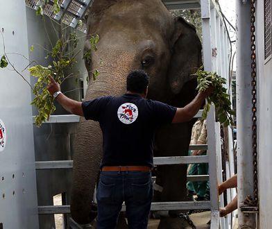 """Pakistan. """"Najbardziej samotny słoń świata"""" nareszcie otrzyma godne warunki"""