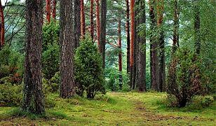 Majówka na świeżym powietrzu. Najlepsze miejsca na spacer po lesie