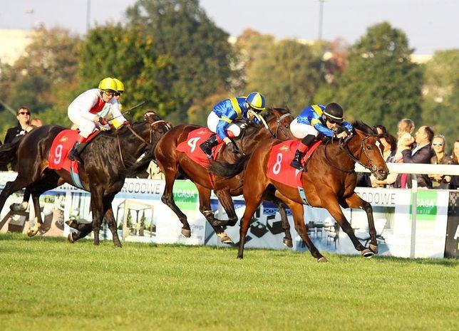 Dwa konie uśpione, jeden skręcił kark. Tragiczny finał Wielkiej Warszawskiej