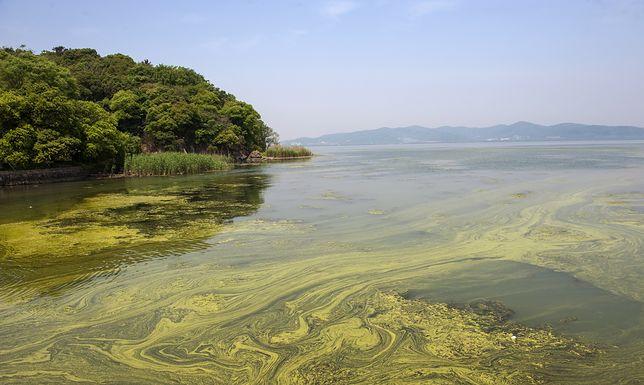 Kąpieliska miejskie i nad jeziorami zamknięte z powodu sinic