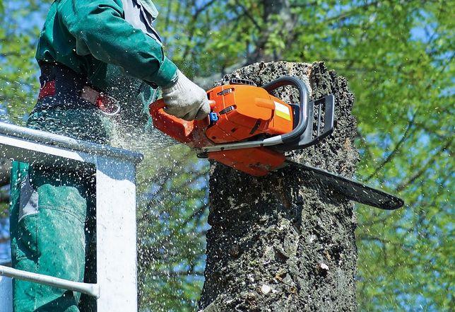 Ptaki zatrzymają Lex Szyszko? Nawet pół miliona zł kary za ścięcie drzewa z gniazdem