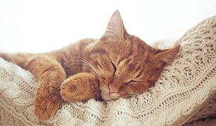 Ciepło kota może być dla nas zbawienne.