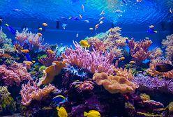 Dubaj znowu zaskakuje. Powstanie rafa koralowa, jakiej nie widział świat
