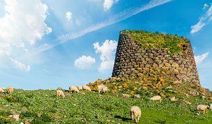 Włochy. Na Sardynii urodził się zielony pies