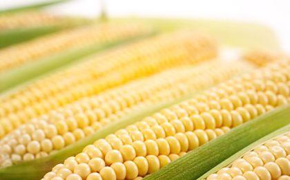 Resort środowiska: Polska chce pozostać krajem wolnym od GMO